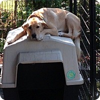 Adopt A Pet :: Indy - Bellingham, WA