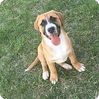 Adopt A Pet :: Statler - Winchester, VA