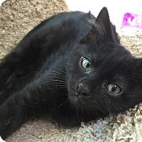 Adopt A Pet :: Isabella - Richmond, VA