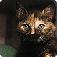 Adopt A Pet :: Kittens - New Rochelle Humane, NY