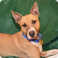 Adopt A Pet :: Cole - Dillsburg, PA
