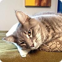 Adopt A Pet :: Tyson - Lombard, IL