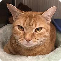Adopt A Pet :: Corkscrew - Webster, MA