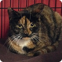 Adopt A Pet :: Venus - Winchendon, MA