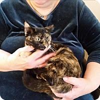 Adopt A Pet :: Ginny - Fairborn, OH