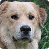 Adopt A Pet :: Dreamer - Kyle, TX