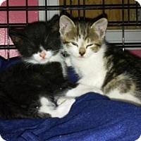 Adopt A Pet :: Trixie & Dixie - Mobile, AL