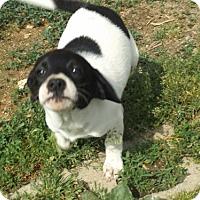 Adopt A Pet :: Ariel - Zaleski, OH