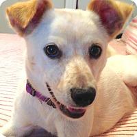 Adopt A Pet :: Mimi - St Petersburg, FL