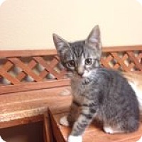 Adopt A Pet :: Jinxx-COMING SOON! - Bridgeton, MO