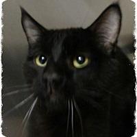 Adopt A Pet :: Lucky - Pueblo West, CO