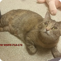 Adopt A Pet :: Snow White - Tiffin, OH