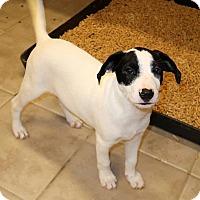 Adopt A Pet :: Pongo - York, PA