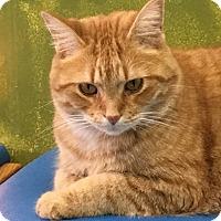 Adopt A Pet :: Mr. Beans - Woodhaven, MI