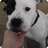 Adopt A Pet :: Norman - Dayton, OH