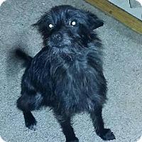 Adopt A Pet :: Bottons - Crestview, FL