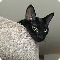 Adopt A Pet :: Tapas - Lombard, IL