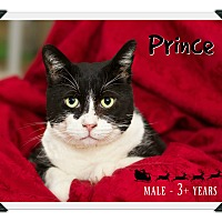 Adopt A Pet :: Prince - Fallbrook, CA