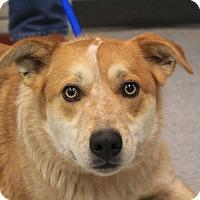 Adopt A Pet :: Duke - Martinsville, IN