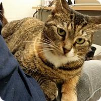 Adopt A Pet :: Dolce - Sarasota, FL