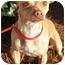 Photo 2 - Chihuahua/Dachshund Mix Dog for adoption in Atlanta, Georgia - Enrique