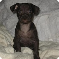 Adopt A Pet :: Brite - Bakersfield, CA