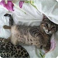 Adopt A Pet :: Tigger - Quincy, MA