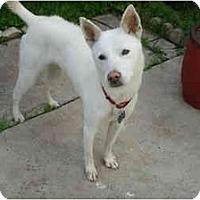 Adopt A Pet :: Avalon - Marysville, CA
