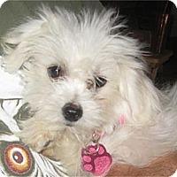 Adopt A Pet :: Sophie - Golden Valley, AZ