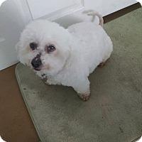 Adopt A Pet :: Frescia - Simi Valley, CA
