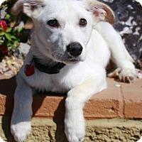 Adopt A Pet :: Denken - Gilbert, AZ