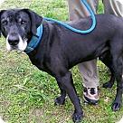 Adopt A Pet :: MR. BIGG