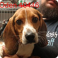 Adopt A Pet :: oden - baltimore, MD