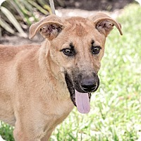 Adopt A Pet :: Jensen - Gainesville, FL