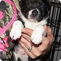 Adopt A Pet :: Deputy - mooresville, IN
