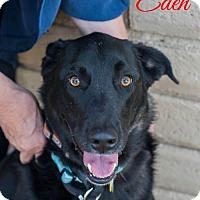 Adopt A Pet :: Eden - Cushing, OK