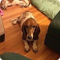 Adopt A Pet :: Stella - Cincinnati, OH