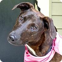 Adopt A Pet :: Pebbles - Baton Rouge, LA