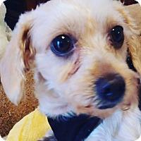 Adopt A Pet :: Gilda - San Dimas, CA