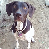 Adopt A Pet :: Izzy - Englewood, CO