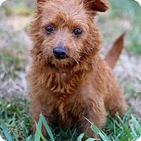 Adopt A Pet :: Gonyea - San Diego, CA