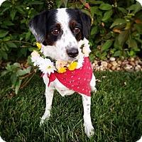 Adopt A Pet :: Vanna-ADOPTION PENDING - Boulder, CO
