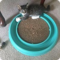 Adopt A Pet :: Frankie Blue Eyes - Wakinsville, GA