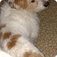 Adopt A Pet :: Sparky aka Atticus - Rockford, IL
