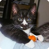 Adopt A Pet :: Aly - Merrifield, VA