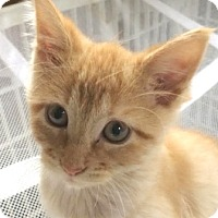 Adopt A Pet :: SImba - Walworth, NY