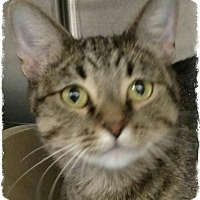Adopt A Pet :: Gracie - Pueblo West, CO