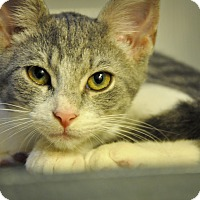 Adopt A Pet :: ANDREW - New Smyrna Beach, FL