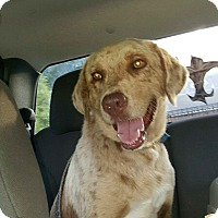 Adopt A Pet :: Gauge Malone - White Cottage, OH
