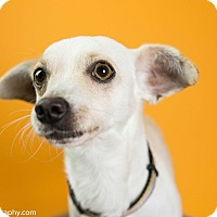Adopt A Pet :: Trevor - Seattle, WA
